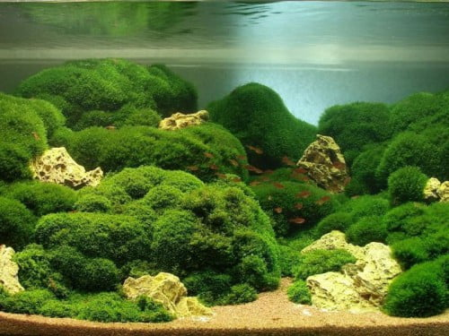 Фото: живая растительность как украшение септиков