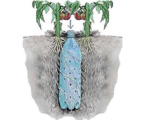 Фото: Самый простой способ поливать корни растений